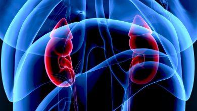 Illustration Nieren mit Nebennieren