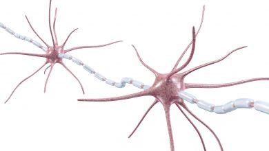 Nervenzellen, Myelinscheide. Foto: © ag visuell