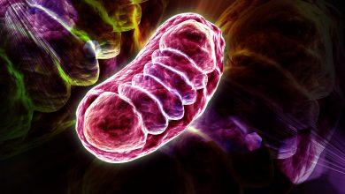 Mitochondrium Foto: © RAJCREATIONZS - Fotolia.com