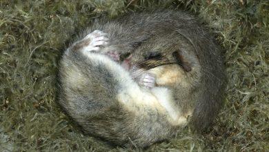 Auch Krebszellen kennen eine Art Winterschlaf. Foto: © PIXATERRA - Fotolia.com