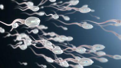 Spermien (Illustration)