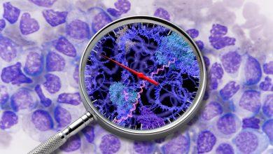 Wissenschafter in Wien haben wichtige Krebsgene mit Hilfe der innovativen SLAMseq Methode charakterisiert, die plötzliche Änderungen in der Gentranskription sichtbar macht. Foto: © IMP