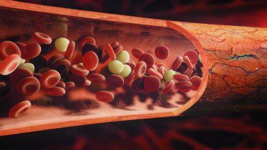 Blutzellen. Foto: © adimas - Fotolia,com